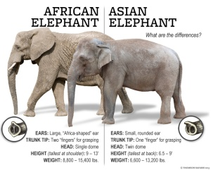 africa-elephant-difference