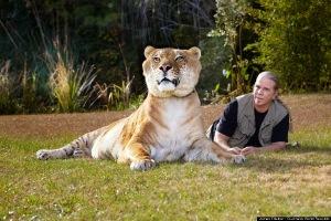 Largest Liger or Biggest Liger
