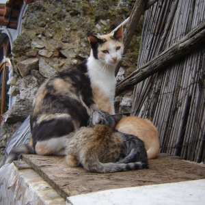 feral cats-