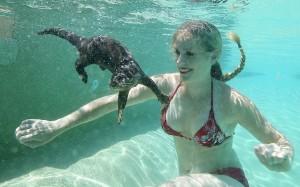Animals_otter_unde_2678424k